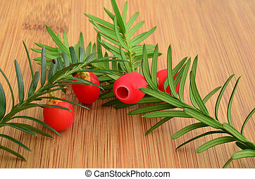 Two yew twigs with red berries - Two green, fresh yew twigs...