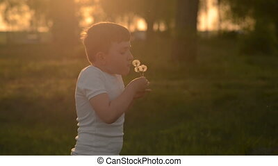 The boy at sunset blows on a dandelion