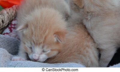 Little kittens in basket - Little kittens in a wicker basket