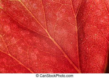 plantas, brillante, Vasos capilares, rojo, Plano de fondo