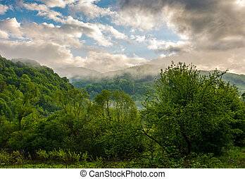 foggy mountain ridge over the forest in springtime -...