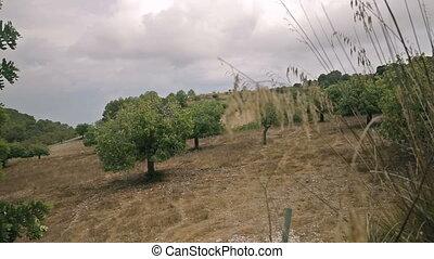 Farms in the suburbs of Cala Mendia - Cala Mendia, Mallorca...