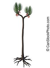 Sigillaria scutellata Tree - Sigillaria trees lived from the...