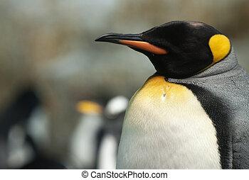 King Penguin.