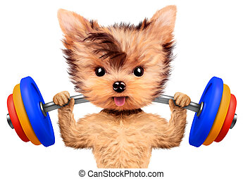 Funny dog training with barbell in sport gym