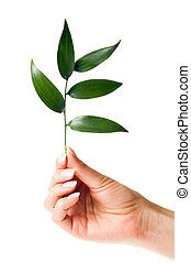 Small plant in woman hand  (isolated on white)