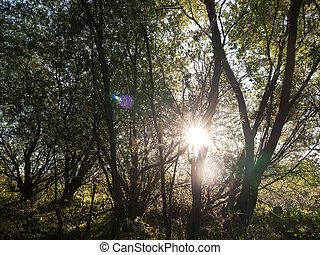 attraverso, creare, natura, sole, dentro, potente, scena, albero, tramortire, spostamento, foresta, pacifico, emotivo, lussureggiante, colpendo