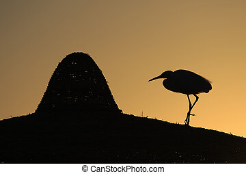 Graceful Heron - Heron silhouette stands gracefully on the...
