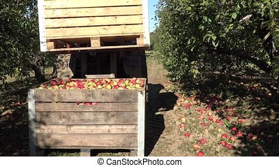 tractor put wooden box full of apple harvest on another box....
