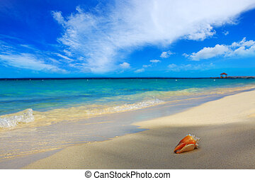 Sea shell on Caribbean beach. - Seashell on beach and sea...