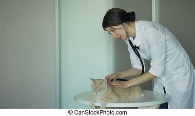 Veterinarian woman examining cat with stethoscope in medical...