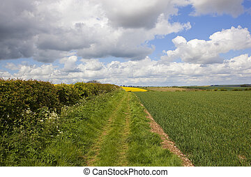 scenic bridleway with hedgerow - a grassy bridleway with a...