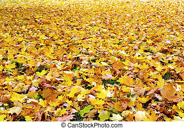 Fall\ autumn leaves - A ground covered with fall leaves.