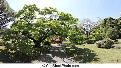 Tokyo sakura spring - Hamarikyu Gardens, Tokyo, Sumida...