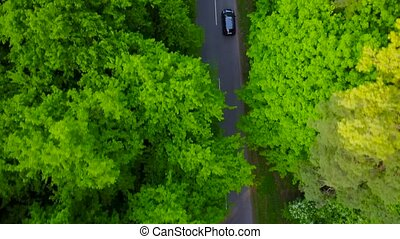 Car riding on the road in the forest- aerial video