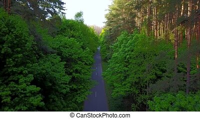 Road through the forest - aerial survey - Road through the...