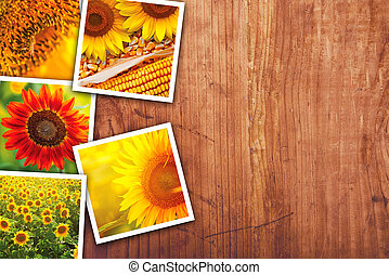 Sunflowers farming and agriculture photo collage