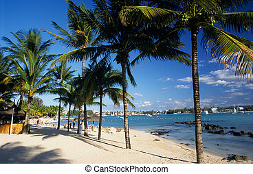 Palm trees on Grand Baie beach at Mauritius Island, Indian...