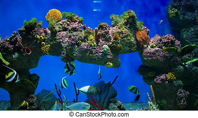 Variety of reef fish - Colored fishes and plants in aquarium