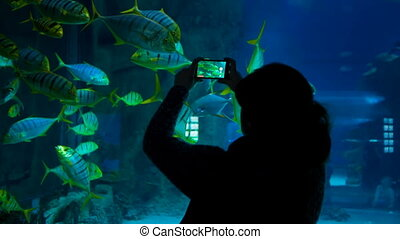 A woman shoots video of fishes in the oceanarium - A woman...