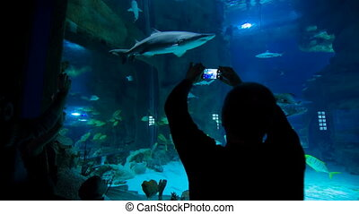 Man takes a picture of a shark in the oceanarium - Tourist...