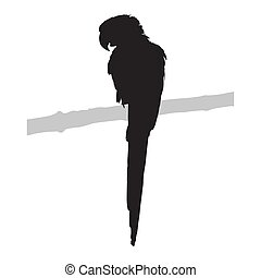Parrot, isolated vector silhouette
