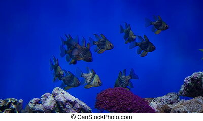 Reef fishes got scared - Dark reef fishes and plants in...