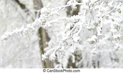 Green leaves of the trees and grass covered with snow after weather changes