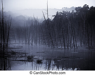 Morning Mist - Eerie body of water where beavers have...