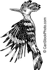 Hoopoe bird doodle hand drawn - freehand sketch illustration...