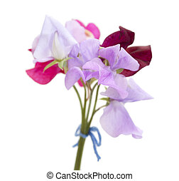 sweet pea flowers of different colors, small posy isolated...