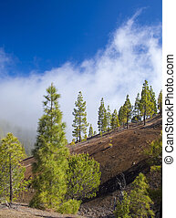 Gran Canaria, central areas of the island, montain valley...
