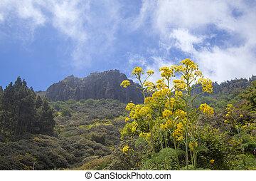 Gran Canaria in May, area of Cruz del Saucillo in San Mateo...