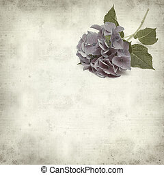 textured old paper background with blue Hydrangea...