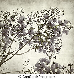 textured old paper background with blue jacaranda flowering...
