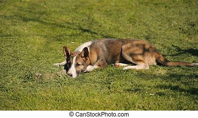 Big Dog Sleeping and Than Wake Up - Homeless big dog...