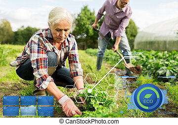 senior couple working in garden or at summer farm - organic...