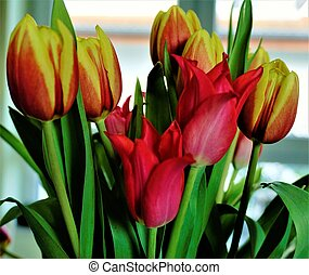 Bunch of colorful tulips