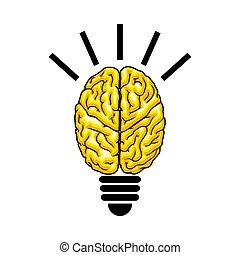 Bulb as the brain