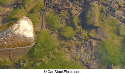 A group small tadpoles - Tadpoles are swimming in a shallow...