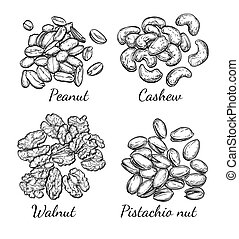 Walnut, cashew, pistachio and peanut - Nuts collection. Ink...