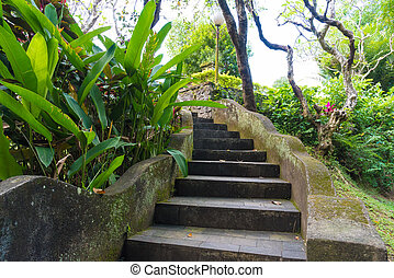 Old stone curved stairs with green exotic vegetation and...