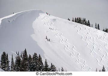powder tracks - Tracks through the powder in the Wasatch...