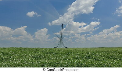 Pea field with watering system - Pea field with Irrigation...