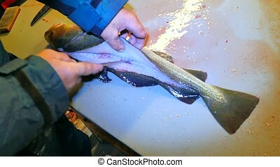 Family fishes farm. The operator makes the dorsal cut with a very sharp knife and the separation of the fillet meat from the skeleton. Hands cut fins, gills, check fish livers, removing guts. Preparation of freshly caught fish