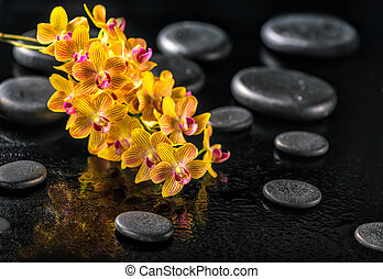 beautiful spa concept of blooming twig orange orchid flower,...