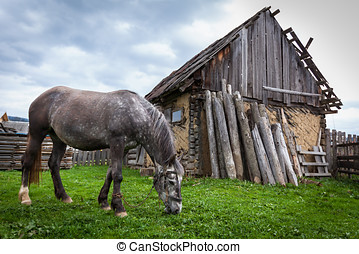 Horse in the countryside. Hobbled grey horse near the old...
