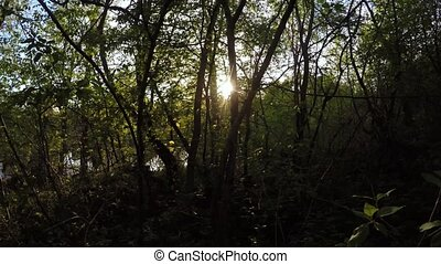 Spring forest at sunset - Movement on the threshold near the...