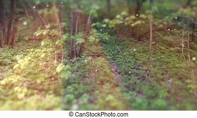 Deep Forest Fairy Tale Scene Fireflies 3D render