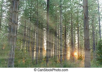 Sunlight Shinning Through the Trees